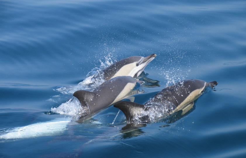 Cruzeiro de visita às Grutas e Golfinhos - Algarve