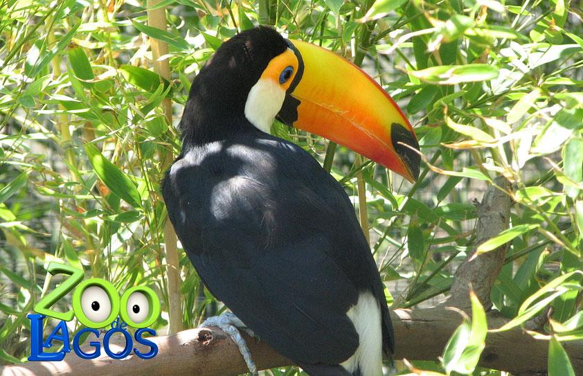 Lagos Zoo Algarve