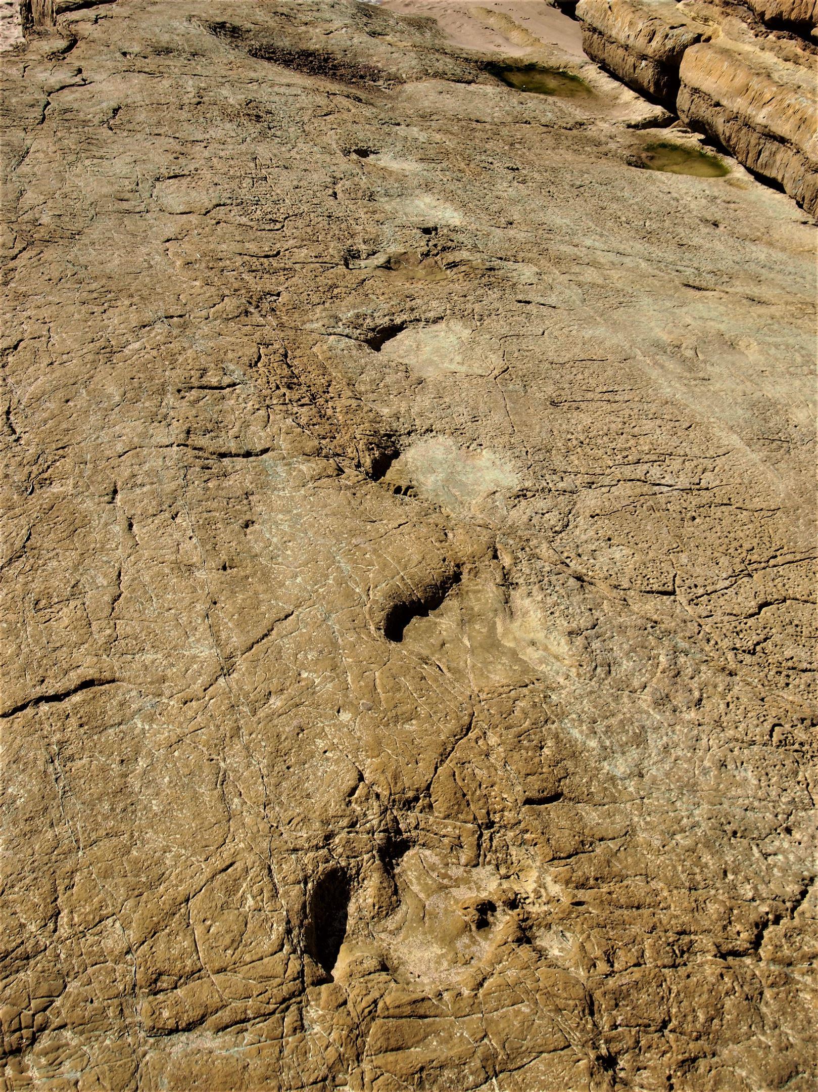 Huellas de dinosaurios en Praia da Salema, Algarve
