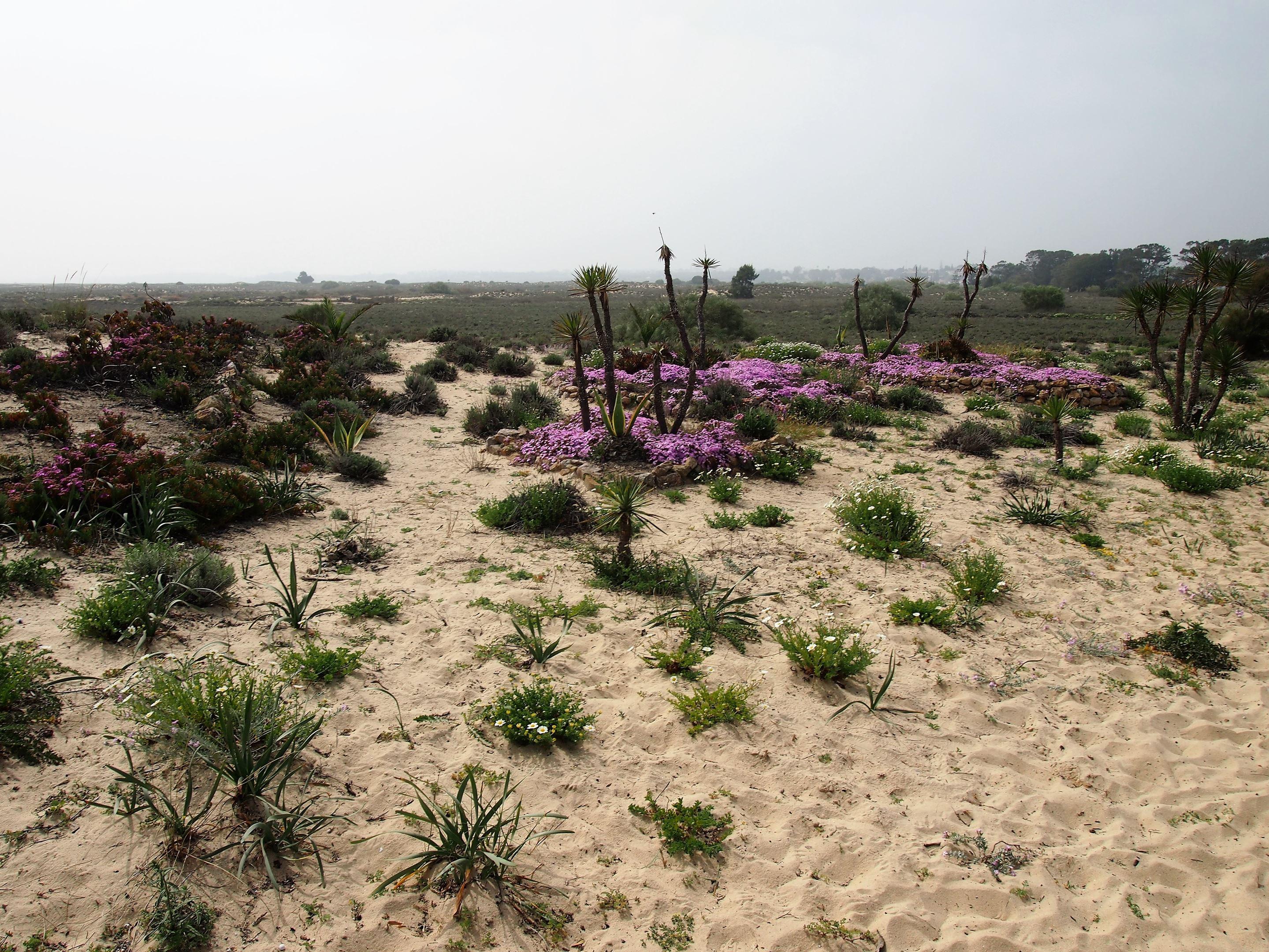 The Ria Formosa near Pedras D'el Rei and Praia do Barril