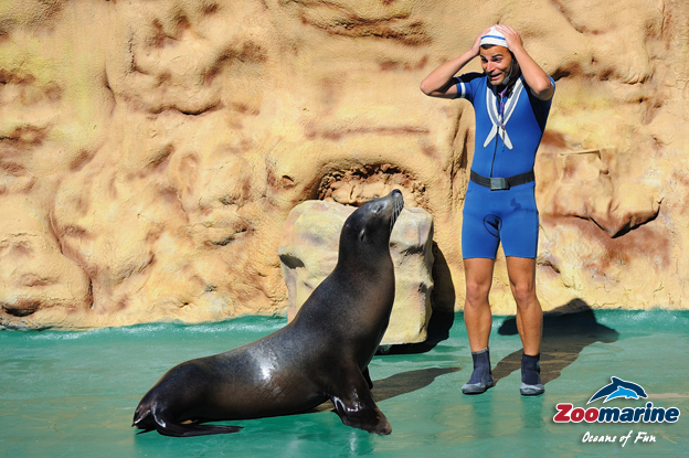 Algarve Zoomarine Seal and Sea Lion Presentation