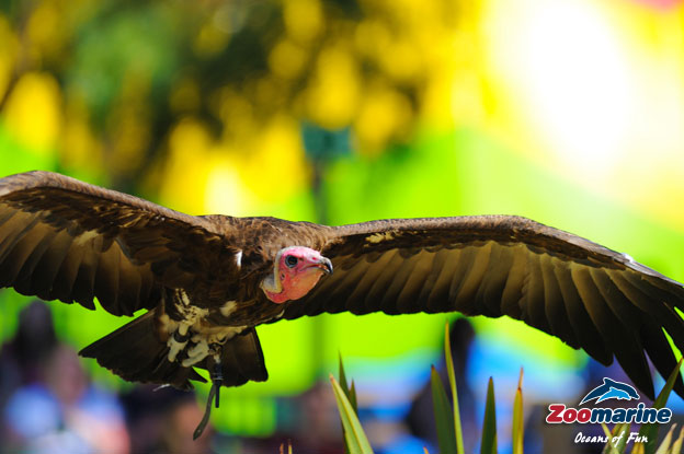 Algarve Zoomarine Birds of Prey Presentation