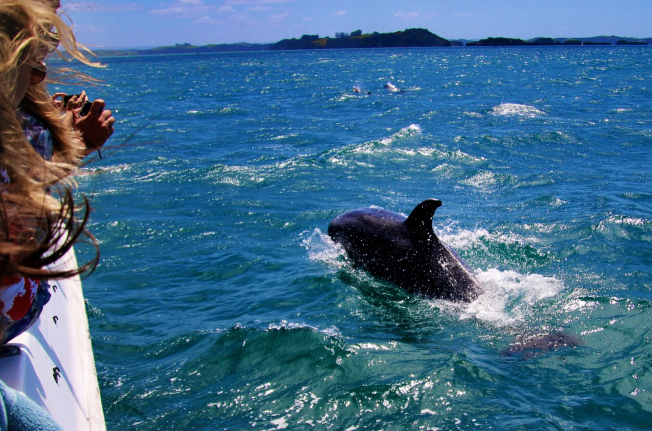 Dolphin Watching in Algarve, Portugal