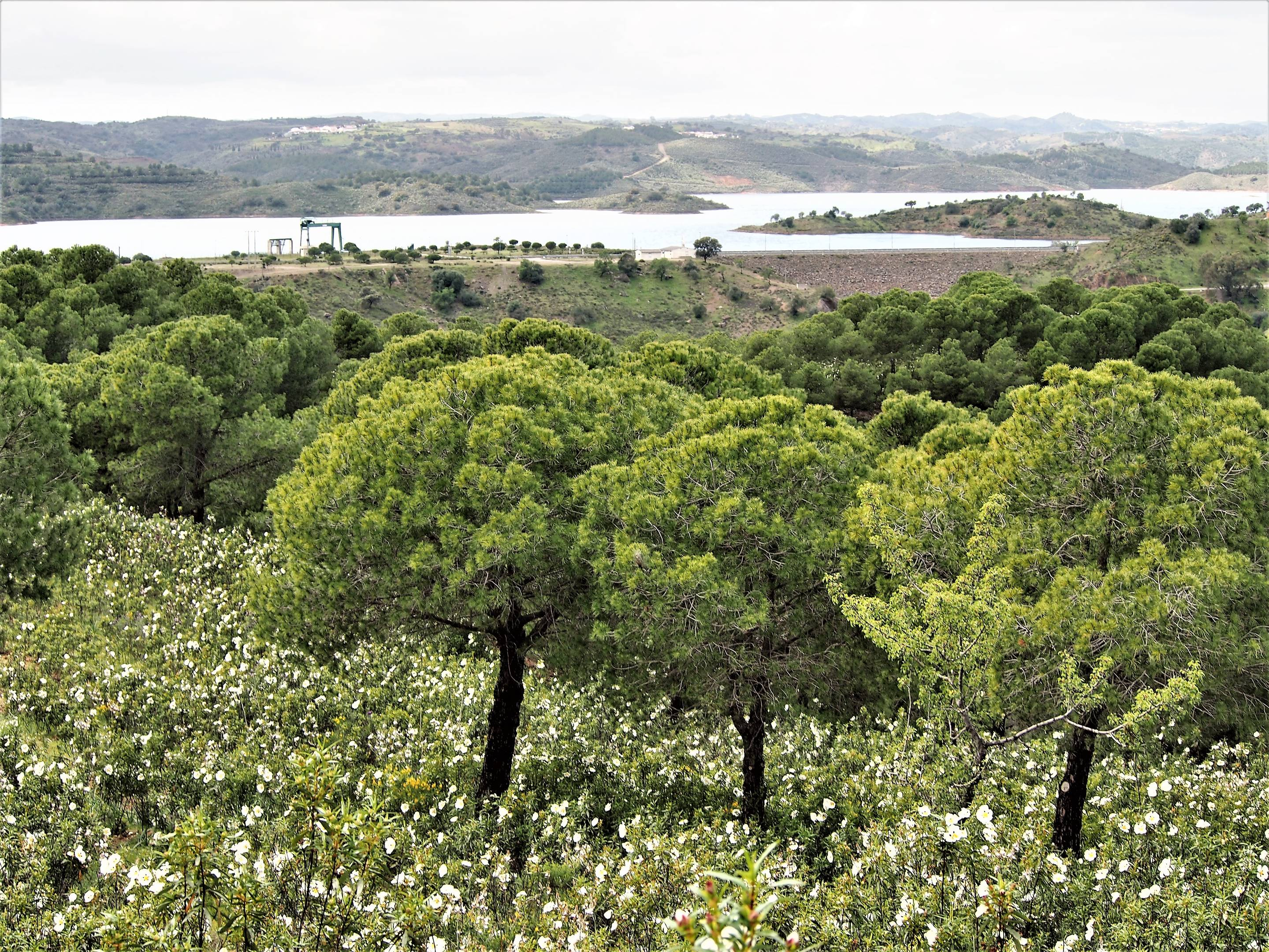 The Odeleite Dam, Castro Marim - at the time of the picture it is Spring and it has been raining for many weeks. The dam is almost full and the plants are in bloom