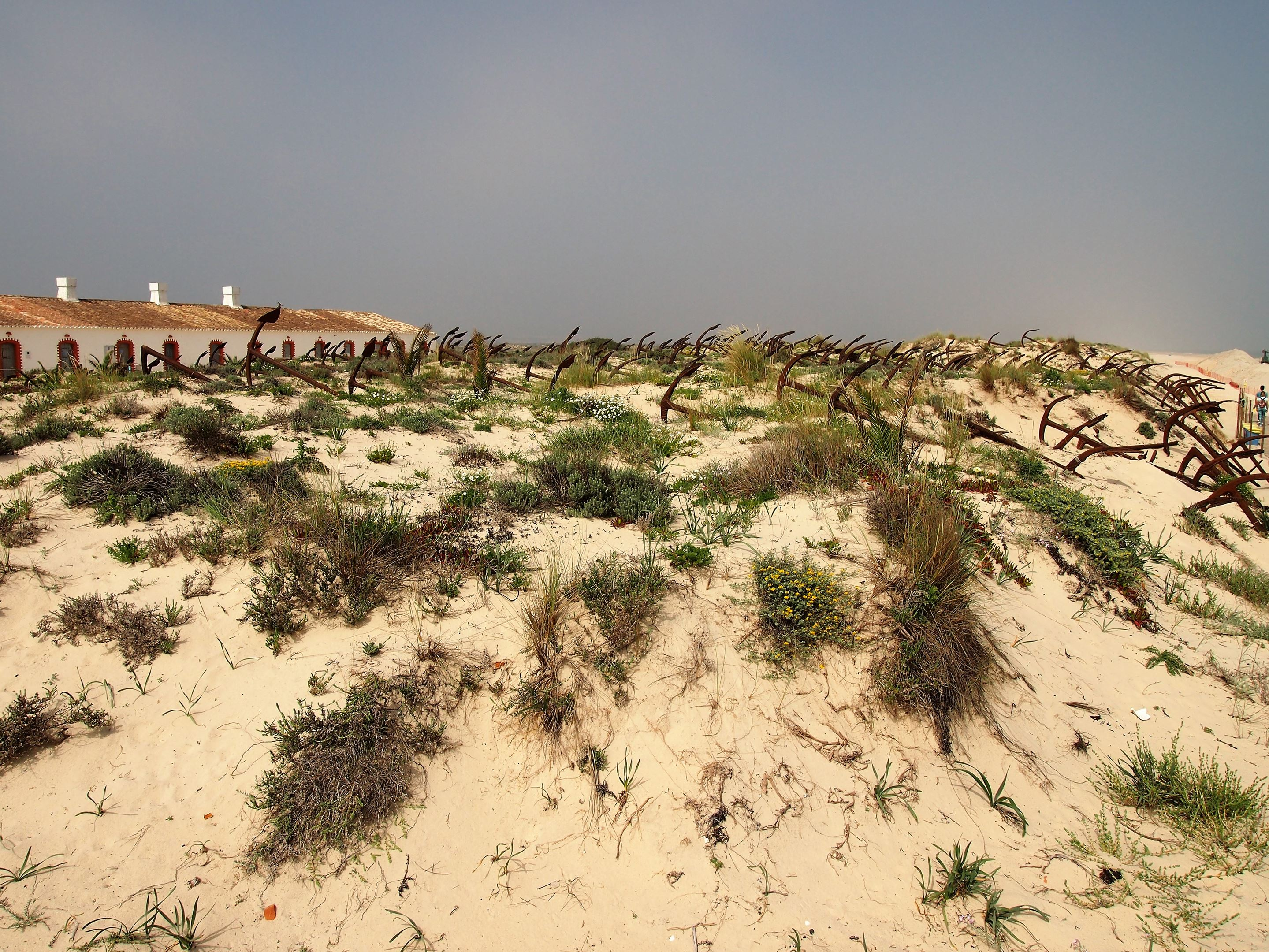 On the west side of Ilha de Tavira, is the anchor cemetery, at Praia do Barril