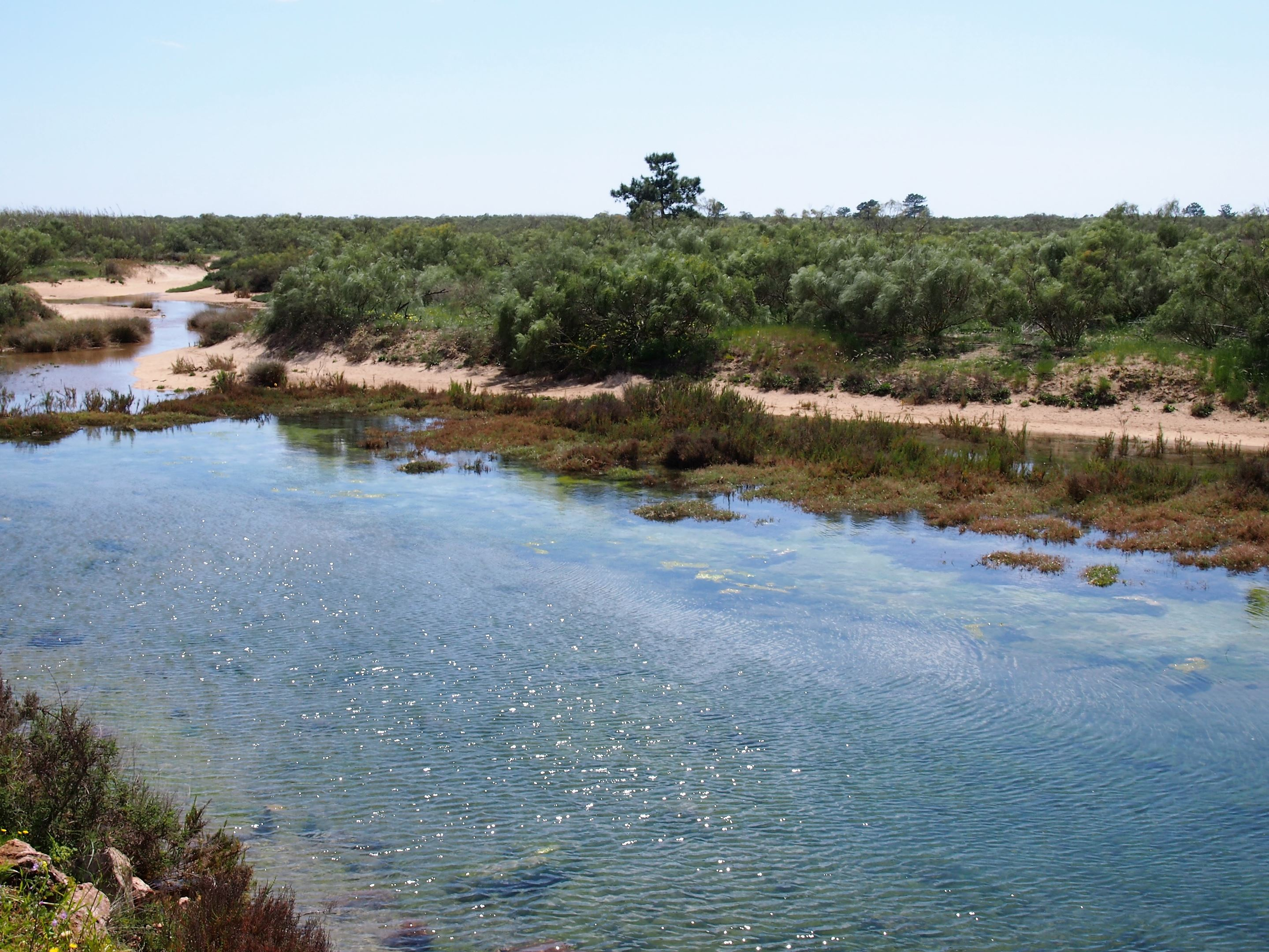As you walk to Praia de Santo António, on the right you will see the largest forest in the Algarve, Mata Nacional das Dunas Litorais