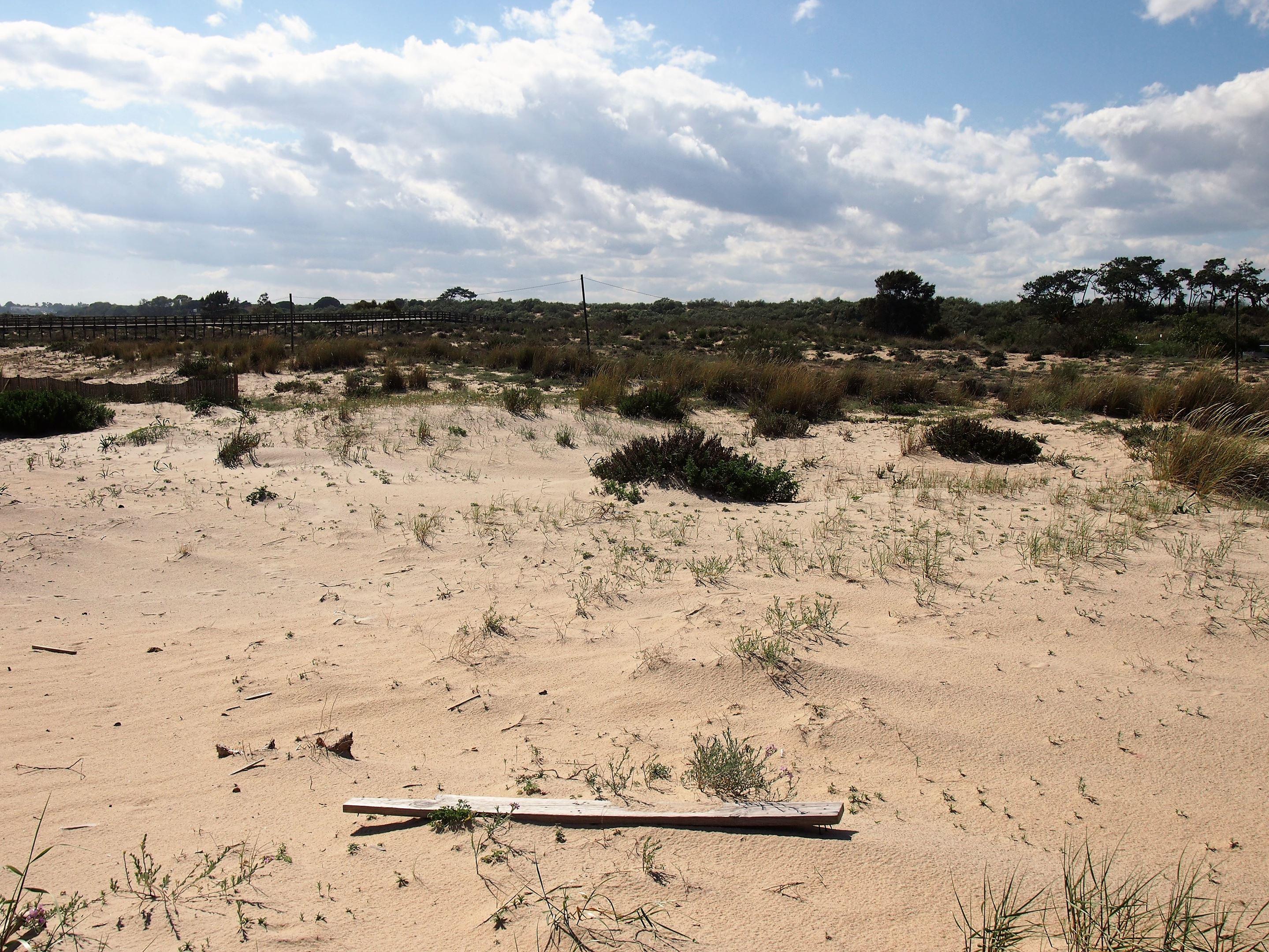 In the eastern Algarve, the Ria Formosa Natural Park starts at Praia da Manta Rota