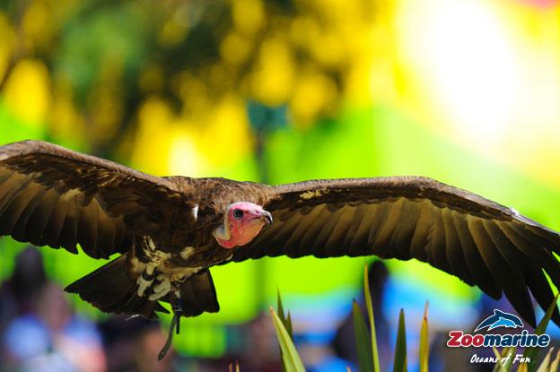 Show de Aves de Rapina - Zoomarine, Algarve